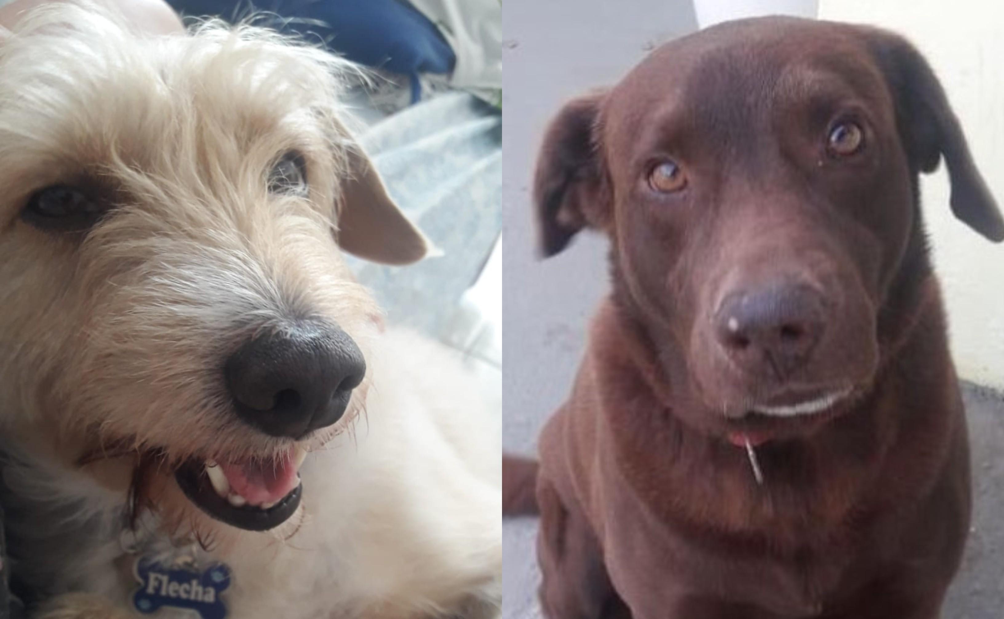Cachorro de família com criança autista é envenenado e morto no litoral de SP: 'Sensação de desespero'