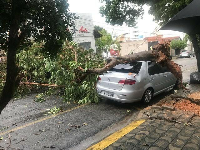 Forte chuva atinge Divinópolis; quedas de árvores e o desabamento do teto do camelódromo são registrados - Radio Evangelho Gospel