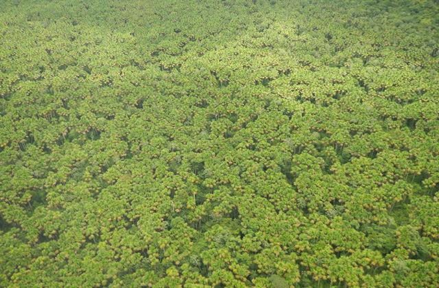 Empresas privadas adotam 8 parques na Amazônia para proteção ambiental