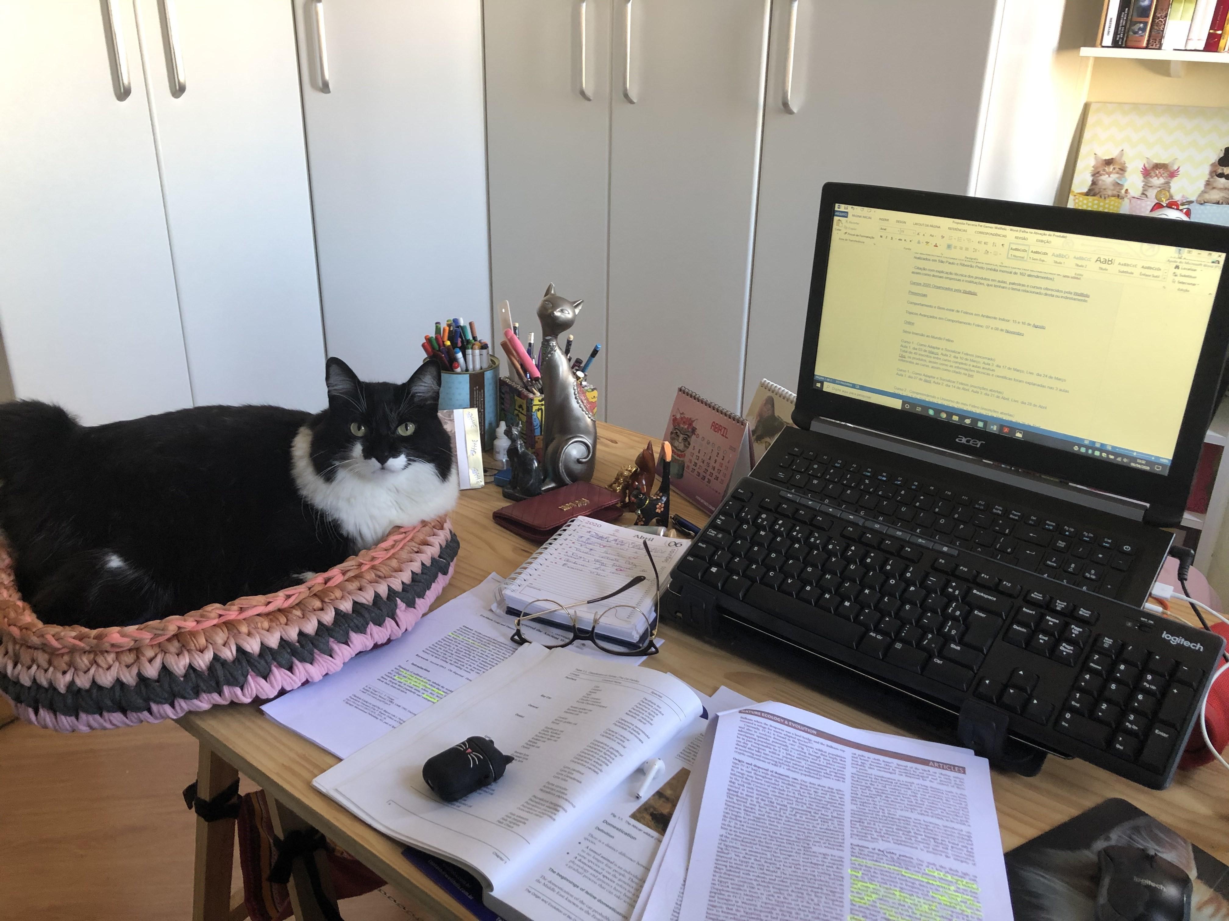 Gatos na quarentena: mudança na rotina da casa pode deixar animais estressados