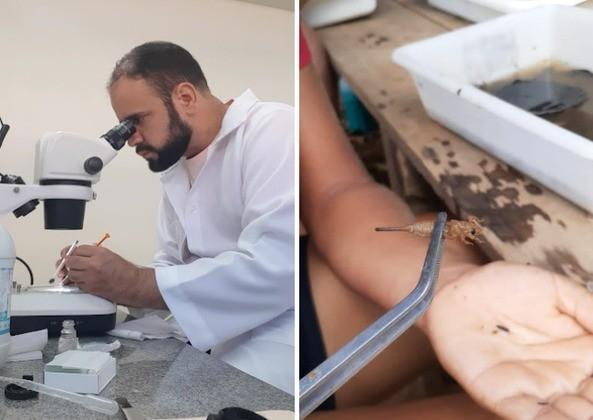 Estudo inédito faz levantamento de insetos aquáticos em área ambiental no interior do Acre