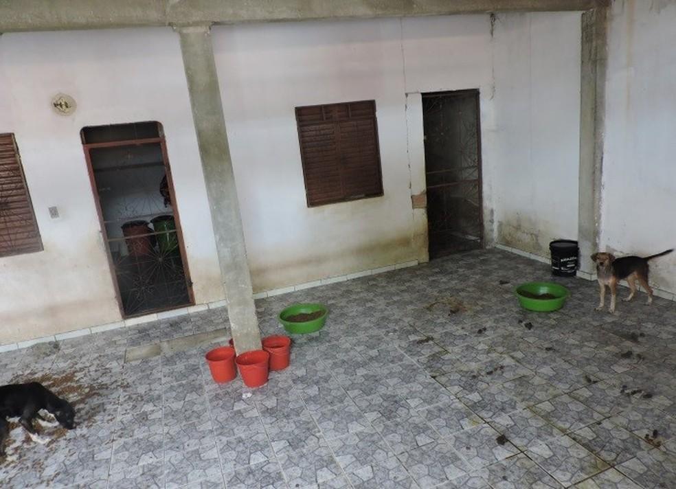 Cães foram resgatados por ONG (Foto: Divulgação/Polícia Civil)