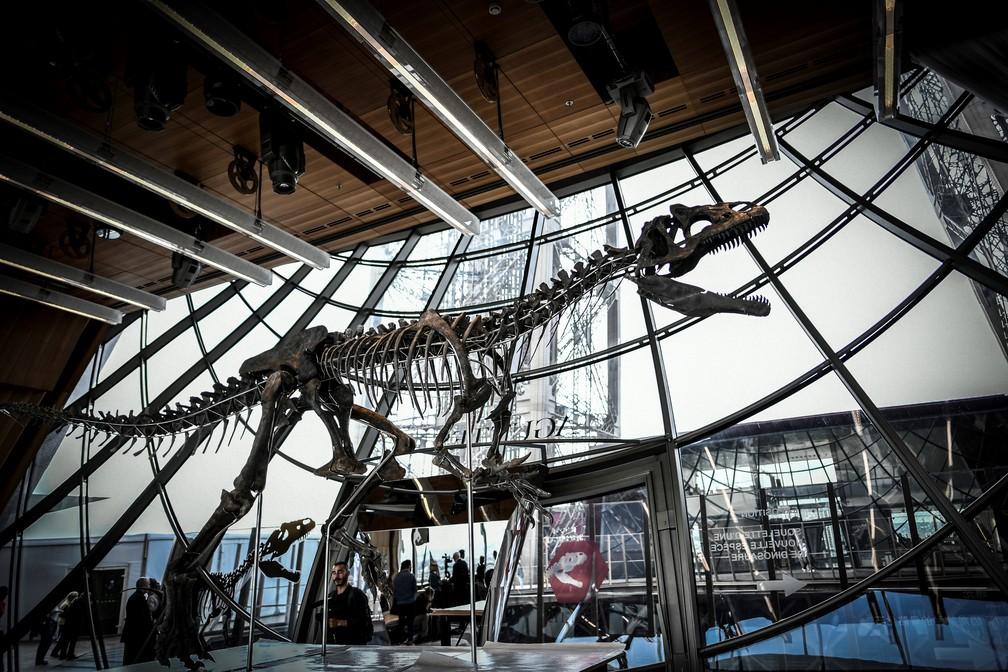 Esqueleto foi leiloado por 2,3 milhões de dólares (Foto: Stephane de Sakutin/AFP)