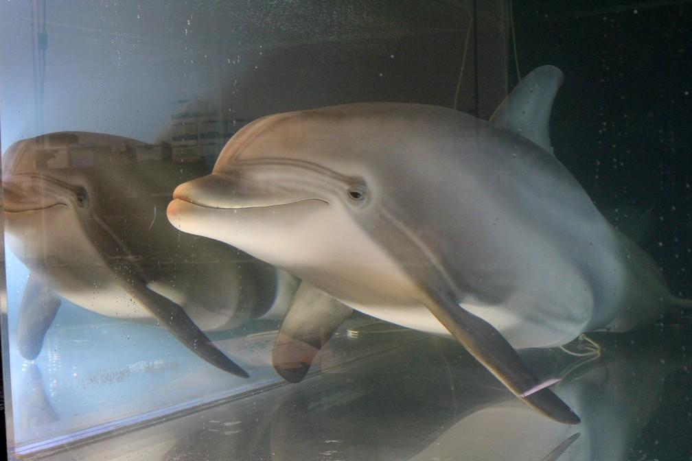 Projeto do golfinho-robô custou US$ 26 milhões — Foto: Nathan Frandino/Reuters