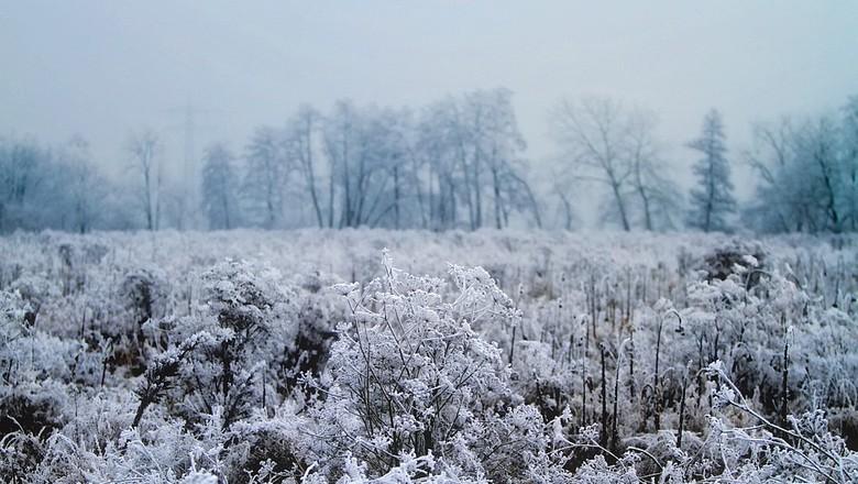 neve-gelo-geada-frio-planta-fria (Foto: Pixabay/12019/Creative Commons)