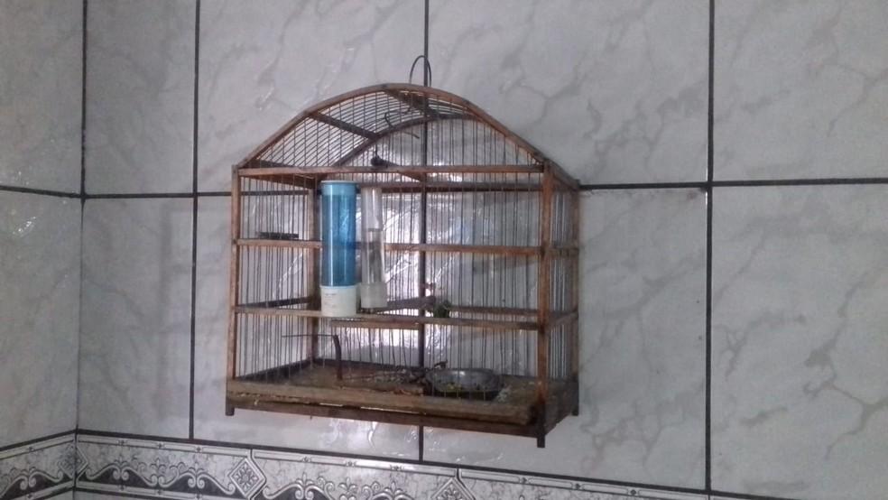 Aves eram mantidas irregularmente em cativeiro em Osvaldo Cruz — Foto: Polícia Militar Ambiental