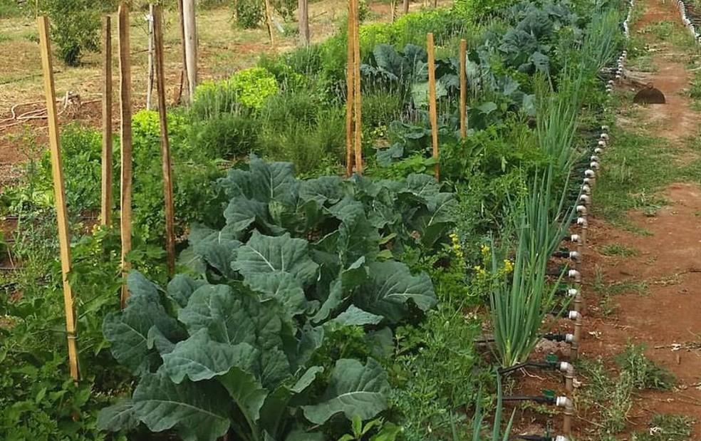 Agricultor virtual cuida de horta em área que fica em Tatuí (Foto: Arquivo Pessoal/Antoine Dubacq)