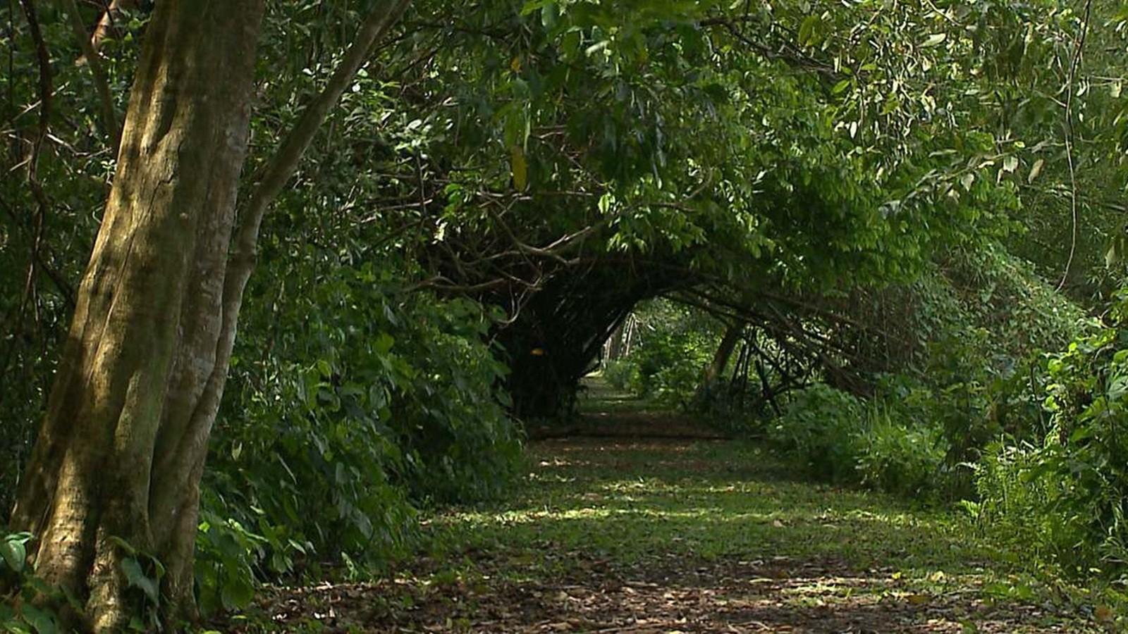Paraíba reduz ações de desmatamento da Mata Atlântica em 47%, aponta relatório - Notícias - Plantão Diário