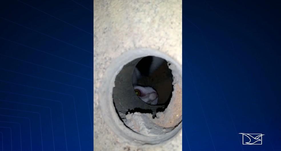Gato está preso em galeria situada na Rua Grande no Centro Histórico de São Luís — Foto: Reprodução/TV Mirante