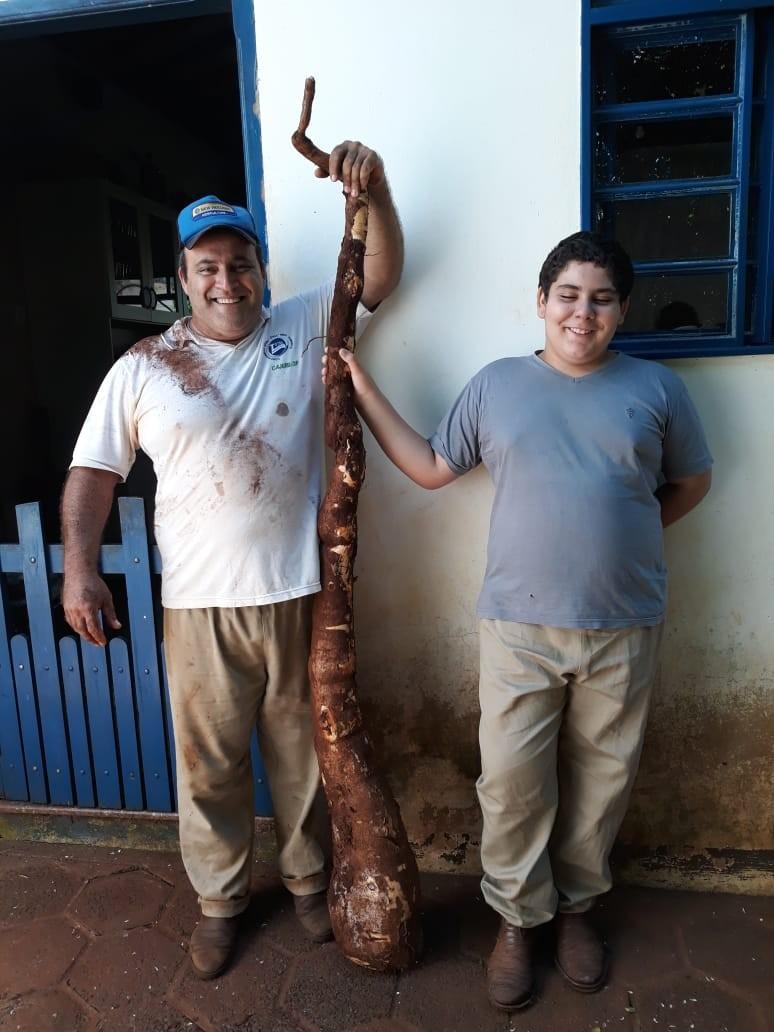 Família encontra mandioca 'gigante' em sítio de São Simão, SP