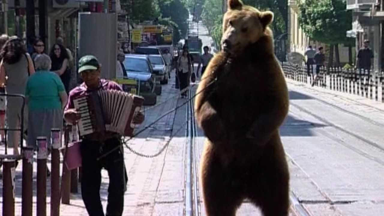 O dia em que ursos dançarinos descobriram a liberdade
