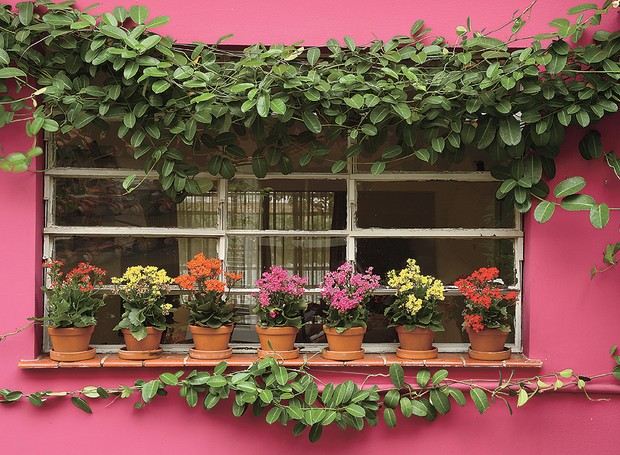 O vitrô da cozinha não é mais o mesmo desde que a paisagista Olga Wehba incluiu a trepadeira jasmim-de-madagáscar ao longo da fachada. A espécie foi conduzida por fios de náilon. Sobre o parapeito, os vasinhos de barro trazem calanchoês em tons de rosa, a (Foto: Arquivo Casa e Jardim)
