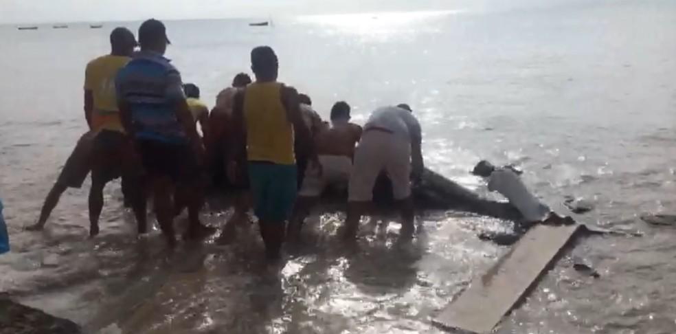 Pescadores empurraram para o mar a baleia que encalhou em Ponta de Pedras, em Goiana, no Grande Recife  (Foto: Álvaro Mello/WhatsApp)