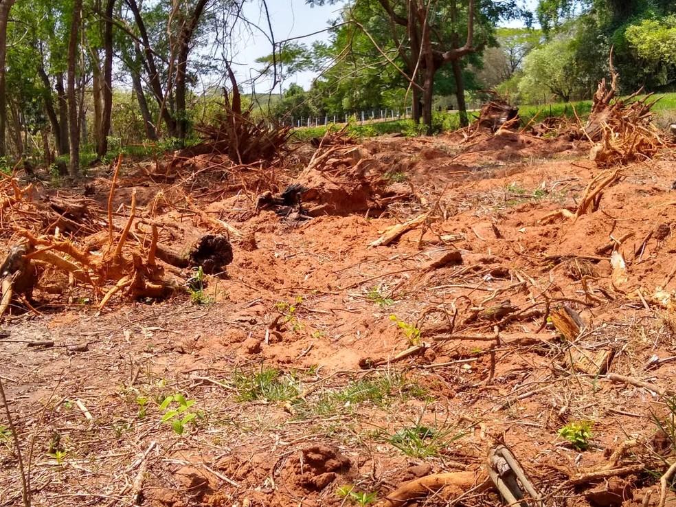 Policiais constataram, entre outras irregularidades, a supressão da vegetação nativa da APP — Foto: Polícia Ambiental/Divulgação