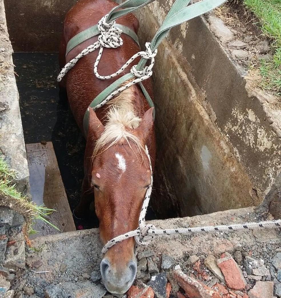 Segundo os bombeiros, animal não apresentava ferimentos graves (Foto: G1 Santos)