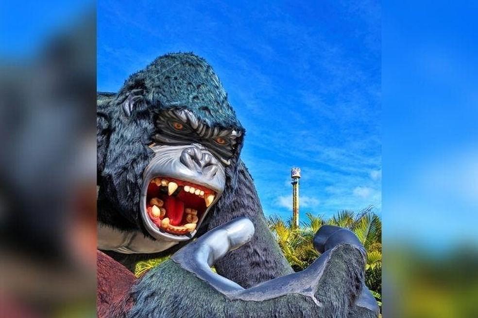 Estátua de gorila é um dos pontos procurados para fotos em parque — Foto: NSC TV/Reprodução