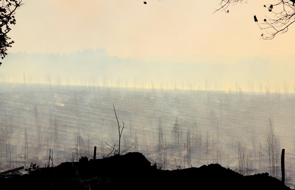 Incêndio consumiu vegetação às margens da rodovia — Foto: Eduardo Gomes/ Arquivo pessoal