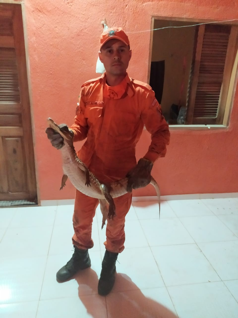 Bombeiros resgatam jacaré em casa do município de Ipueiras, no Norte do Ceará
