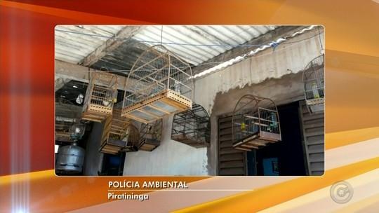 Morador de Piratininga é multado em R$ 4 mil por manter pássaros em cativeiro