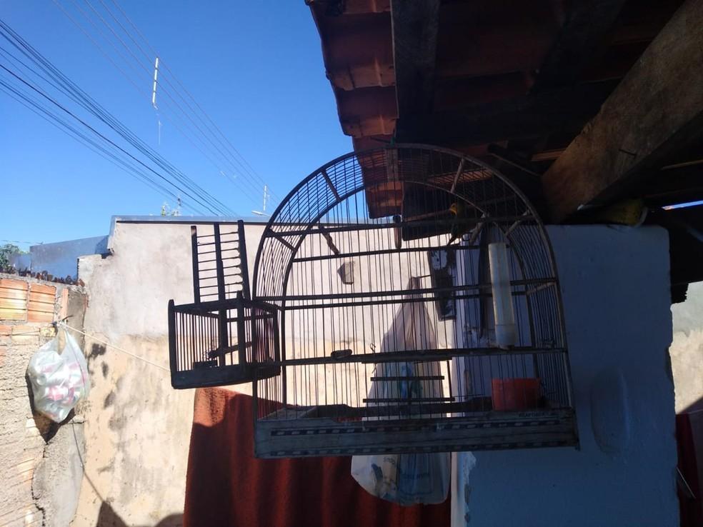 """Policiais flagraram também armadilhas montadas, com utilização de aves como """"iscas"""" para captura de outras — Foto: Polícia Ambiental/Divulgação"""