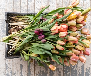 Primavera: dicas de cuidados com plantas e 10 flores para cultivar