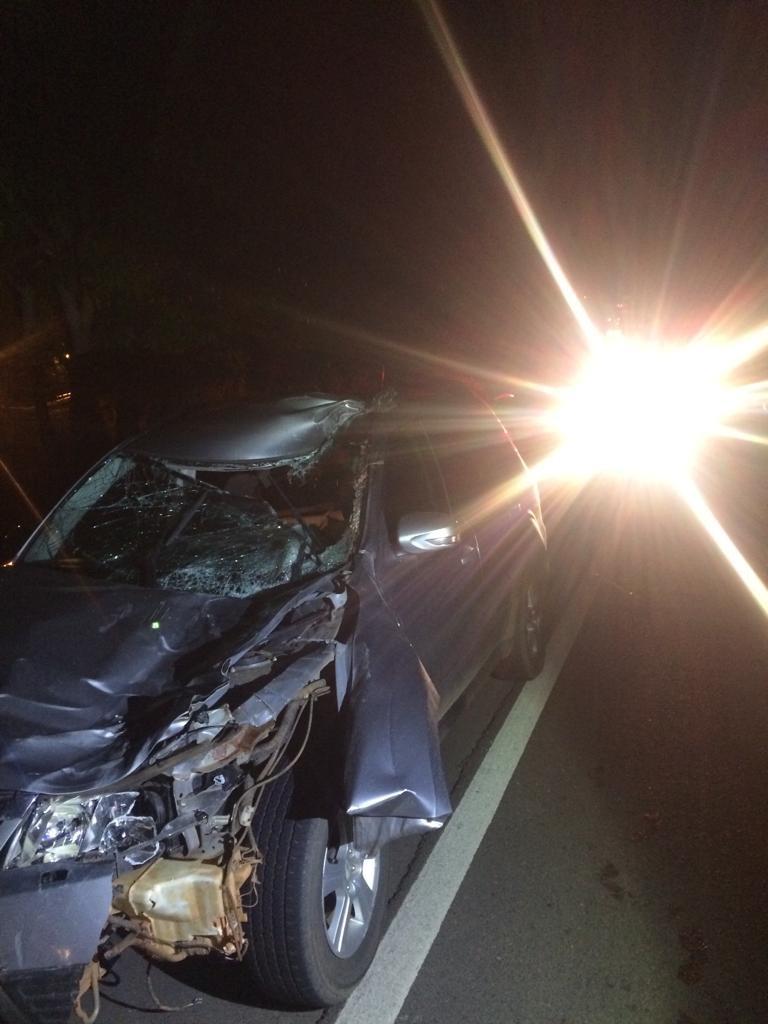Cavalo na pista provoca acidente na rodovia em Pompeia e deixa um ferido  - Notícias - Plantão Diário