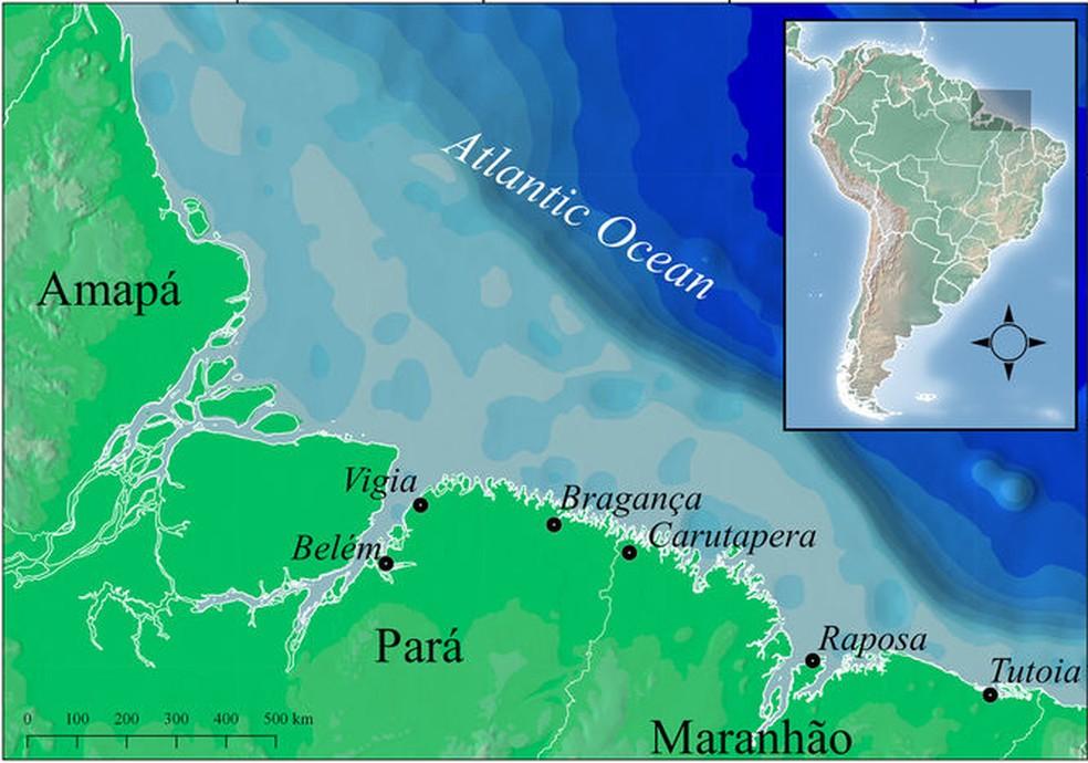 Pesca de tubarões em extinção foram identificados em sete regiões no litoral norte do Brasil, incluindo o Maranhão (Foto: Reprodução/Nature)