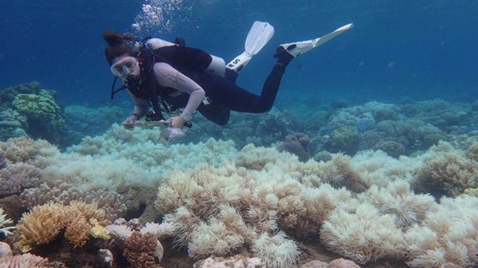 Branqueamento de corais ocorre por aumento de temperatura do oceano e é intensificado pelo aquecimento global.  — Foto: ARC Centre of Excellence for Coral Reef Studies