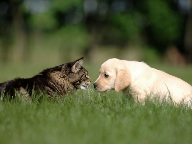 cat and dog love and friendship (Foto: Getty Images/iStockphoto)