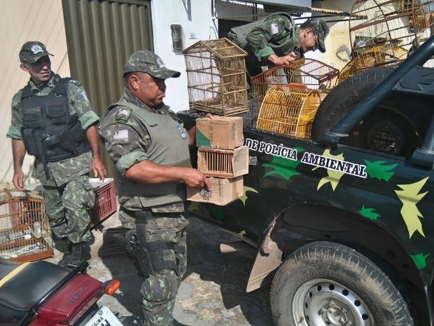 Polícia Ambiental apreendeu mais de 100 animais silvestres em operação na capital (Foto: Polícia Ambiental)