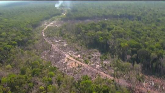 Entenda como o Inpe monitora o desmatamento na Amazônia