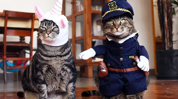 Gato Chico e seu irmãozinho, do Cansei de Ser Gato (Foto: Divulgação)
