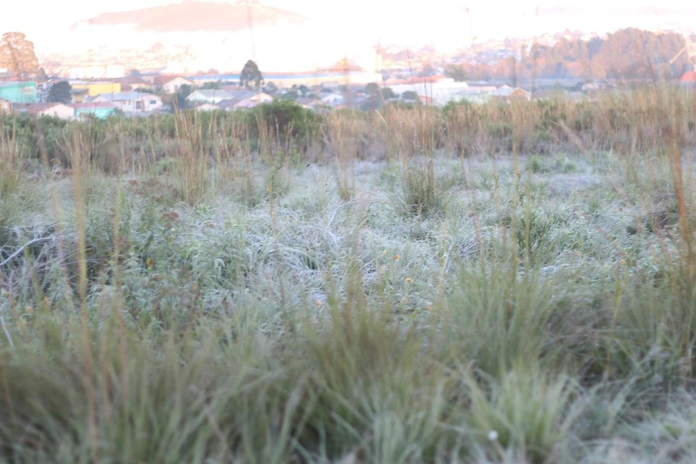 Campos ficaram cobertos pela geada em Lages — Foto: Pablo Gomes/ Prefeitura de Lages