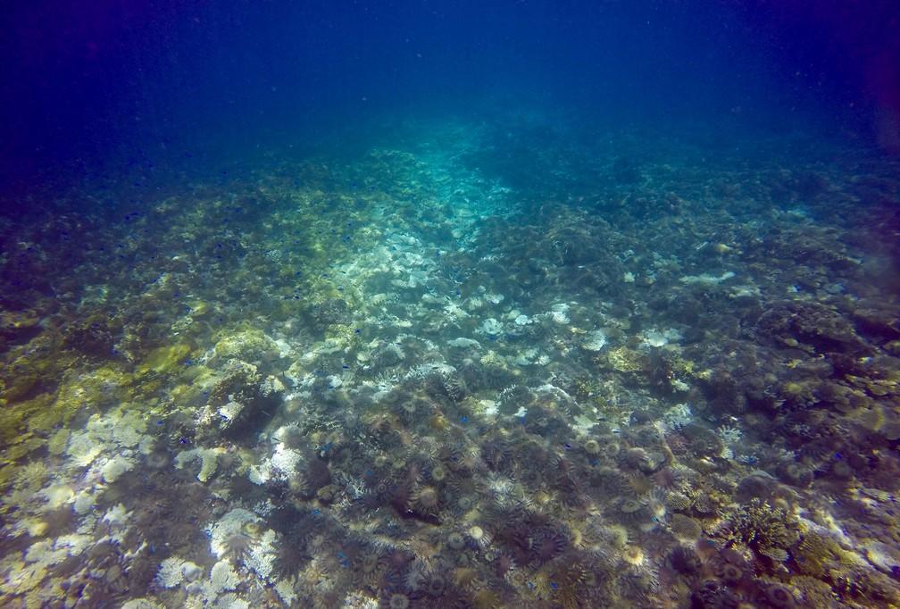 Estrelas-do-mar são vistas nesta quinta-feira (5) em parte da Grande Barreira de Corais, na Austrália (Foto: Joint Field Management Program/Great Barrier Reef Marine Park Authority/Handout via REUTERS )