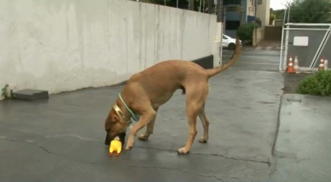 Cachorro foge de casa, é flagrado brincando na água de chafariz e vídeo viraliza, em Paranavaí