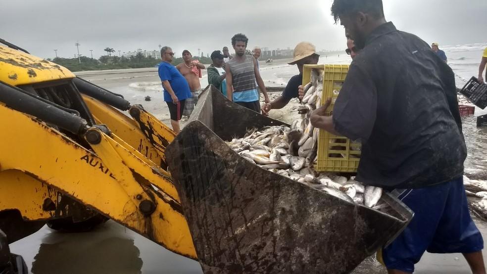 Retroescavadeiras, carros e caminhões ajudaram os moradores a retirarem os peixes da praia da Enseada, em Bertioga (Foto: Mayara Oliveira Lopes/Arquivo Pessoal)