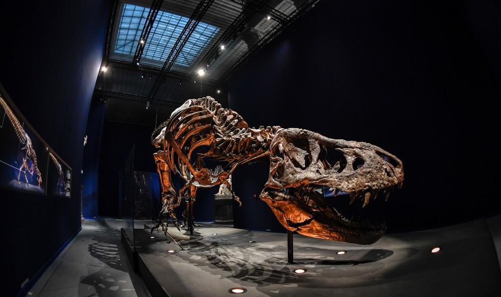 Fêmea viveu há mais de 60 milhões de anos (Foto: Stephane de Sakutin/AFP)