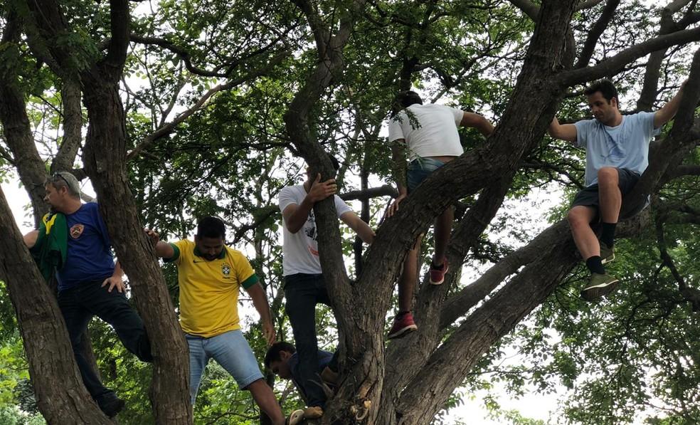 Pessoas sobem em árvores, na Esplanada dos Ministérios, para tentar enxergar Jair Bolsonaro durante posse, em Brasília — Foto: Michele Mendes/TV Globo
