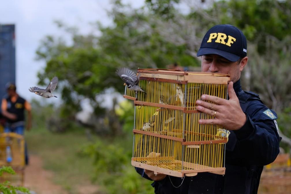 Aves encontradas em situação de cativeiro foram devolvidas à natureza em Alagoas — Foto: Jonathan Lins/Ascom FPI do São Francisco