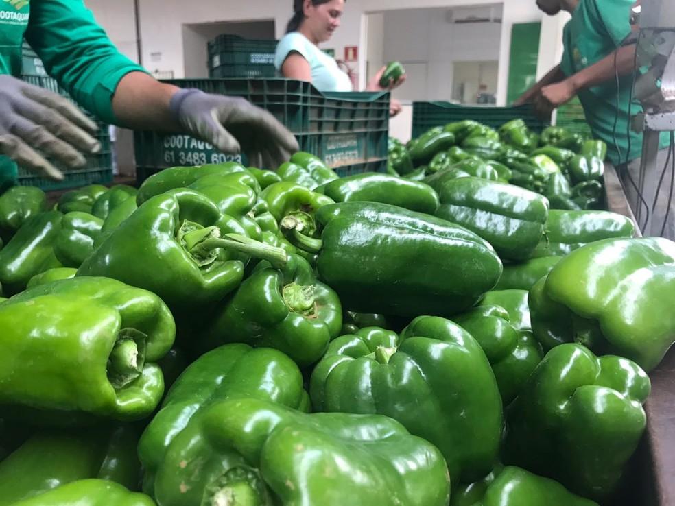 Detalhe dos pimentões produzidos por agricultores da Cooperativa Agrícola da Região de Planaltina (Cootaquara), no Distrito Federal — Foto: Letícia Carvalho/G1