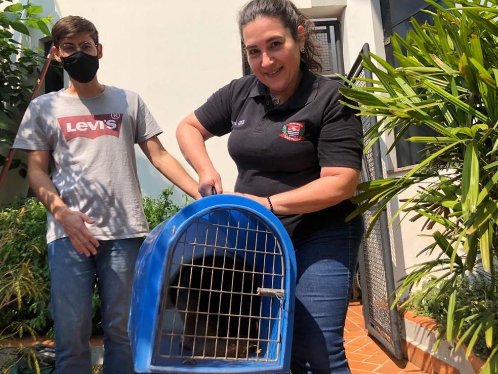 Moradores ajudaram no resgate do tamanduá nesta quarta-feira (22) em Bernardino de Campos — Foto: Simone Abras/Arquivo pessoal