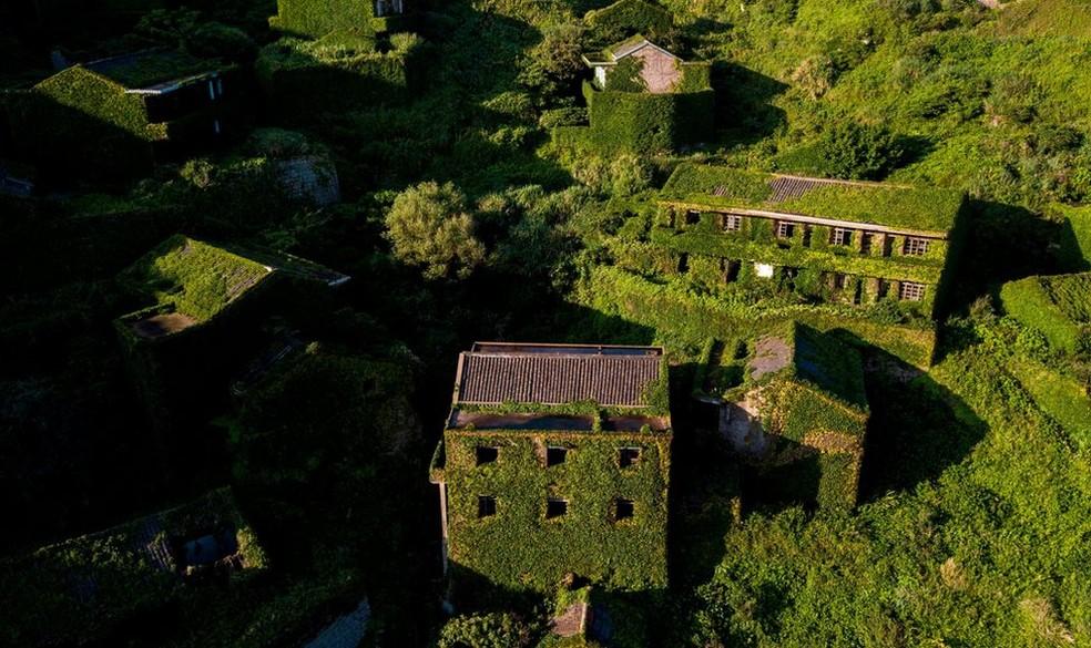Alguns edifícios já foram quase totalmente cobertos pelas plantas (Foto: AFP)
