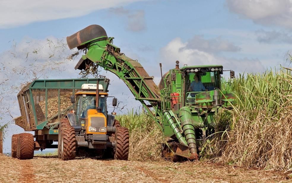 Clima irregular atrapalhou colheita da cana-de-açúcar, segundo consultoria — Foto: Tadeu Fessel/Unica