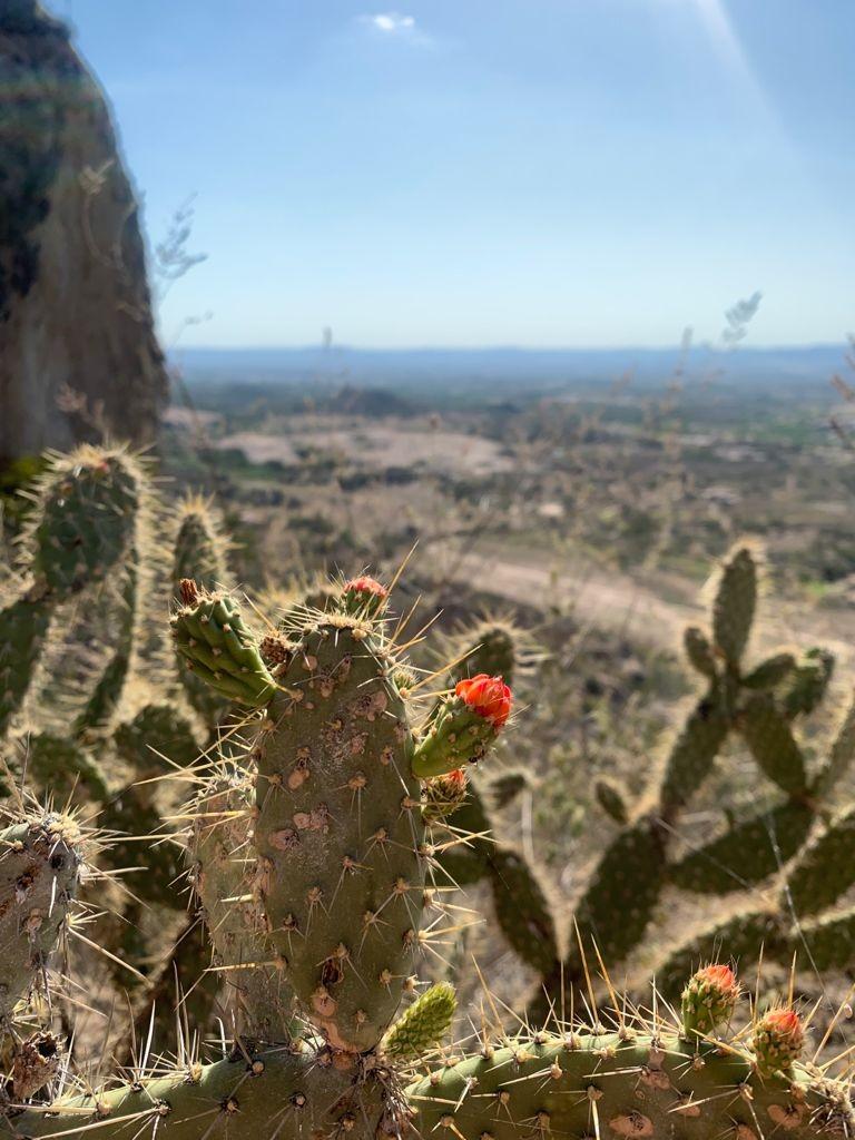 Pedra Furada: conheça o principal ponto turístico de Venturosa, no Agreste