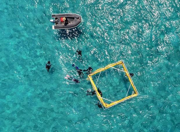 Os cientistas levam o drone até o meio do oceano, onde ele viaja para próximo dos recifes e dispersa as larvas das espécies locais (Foto: QUT/ Reprodução)