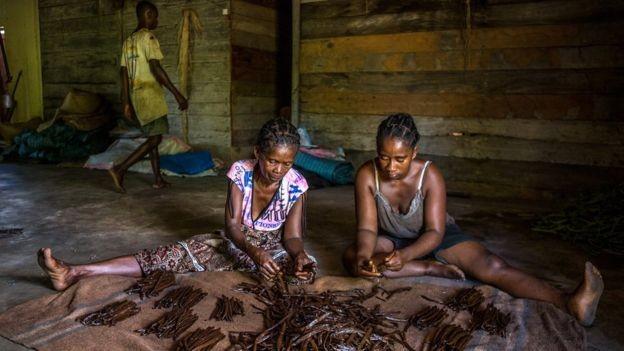 O preço do quilo da baunilha disparou nos últimos cinco anos em Madagascar e hoje se situa na casa dos R$ 2 mil (Foto: Fellipe Abreu)