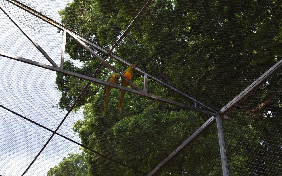 Aspersor de água (equipamento azul à direita da imagem) funciona pelo menos 5 horas por dia para amenizar o calor nos recintos do Zoológico de Goiânia — Foto: Paula Resende/ G1