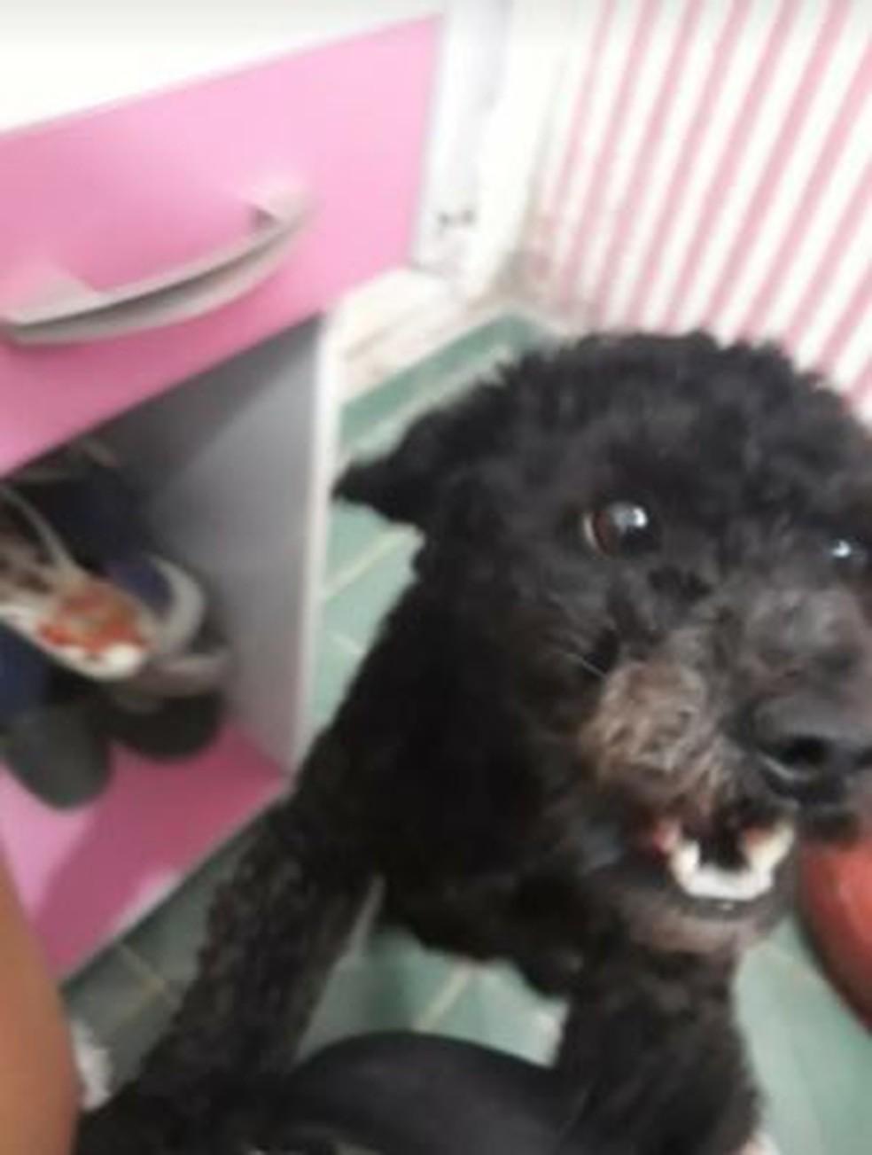 Cachorro Bolt morre após ser baleado em operação da polícia na Vila Cruzeiro — Foto: Reprodução