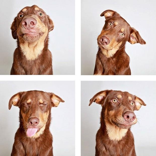 O fotógrafo Guinnevere Shuster fez as fotos para ajudar os animais a serem adotados (Foto: Reprodução/Facebook)
