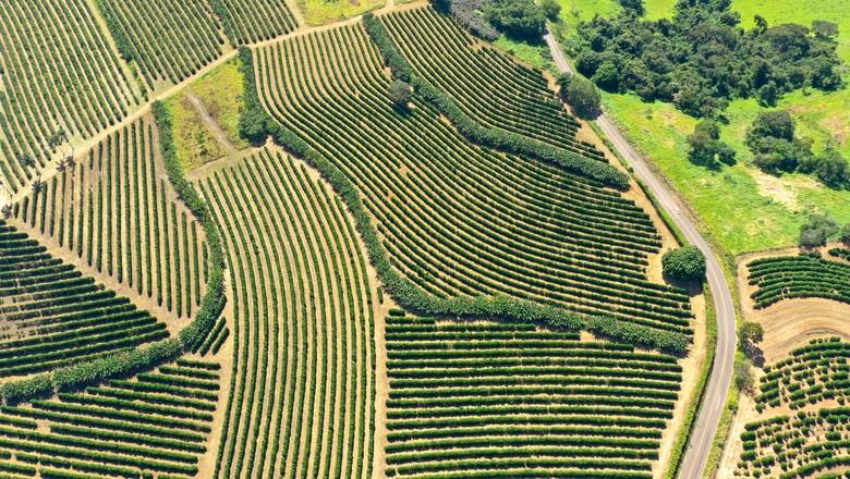 Vista aérea de lavoura (Foto: Ministério da Agricultura/Divulgação)